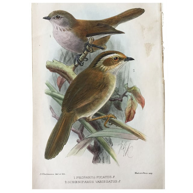 Antique Ornithological Prints - A Pair For Sale - Image 4 of 4
