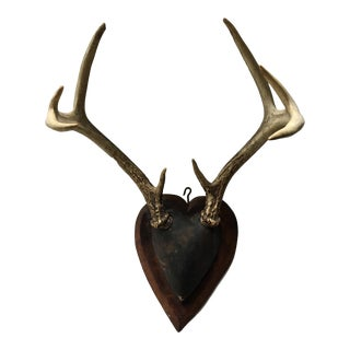 Heart Shaped Wood Mounted Antlers For Sale