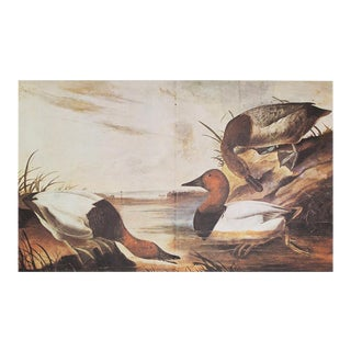 1960s Cottage Style Lithograph of Canvas Backed Duck by John James Audubon