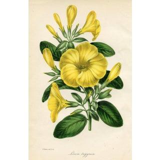 1844 Botanical Print - Flax