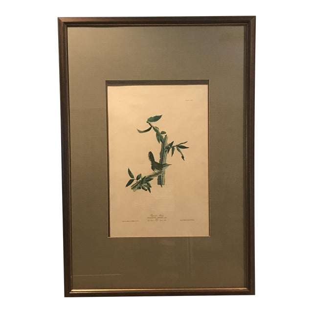 R. Havell Audubon Engraving For Sale