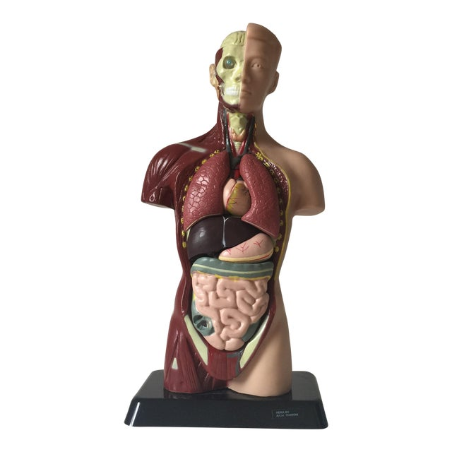 Small Medical Model Sculpture For Sale