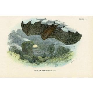 Horse-Shoe Bat Print by Richard Lydekker For Sale