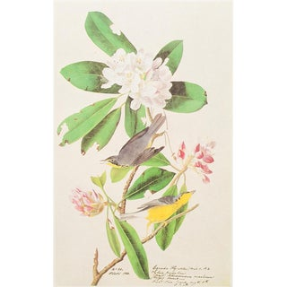 1960s Cottage Lithograph of Canada Flycatcher by Audubon For Sale
