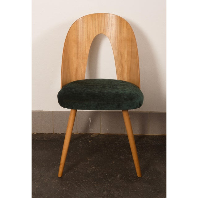 Ash Dining Chairs by Antonin Suman for Tatra For Sale - Image 4 of 10