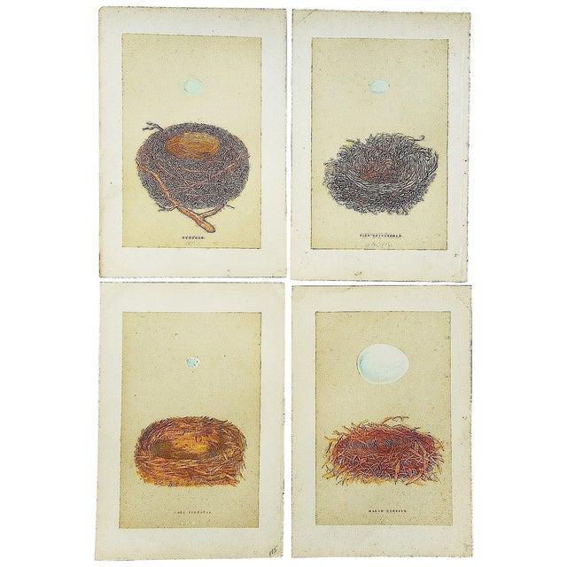 Antique Morris Nest & Egg Prints - Set of 4 - Image 1 of 6