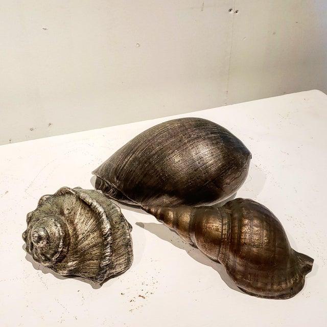 1930s Large Vintage Italian Silvered Bronze Seashells- Set of 3 For Sale - Image 5 of 12