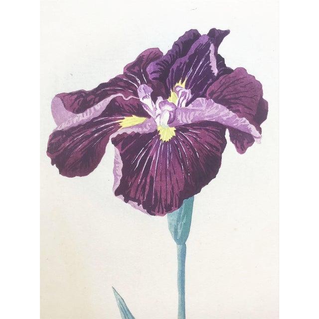 Japanese Iris Woodblock Botanical Print C.1900 For Sale In New York - Image 6 of 9