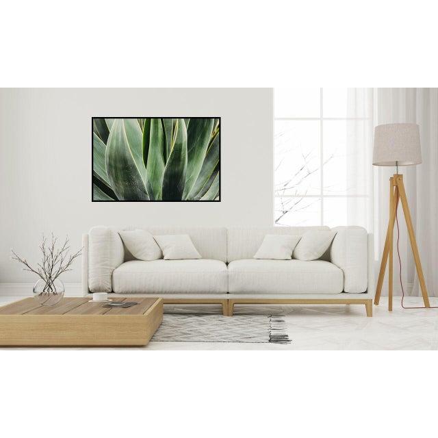 """Yucca Close Up"" Original 24x36 Photograph For Sale - Image 4 of 5"