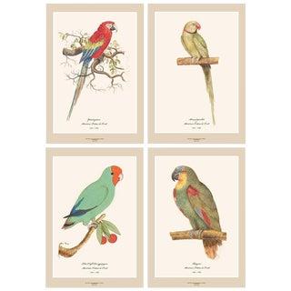 XL 1590s Contemporary Prints of Anselmus Boëtius De Boodt Parrots, Set N2 of 4 For Sale