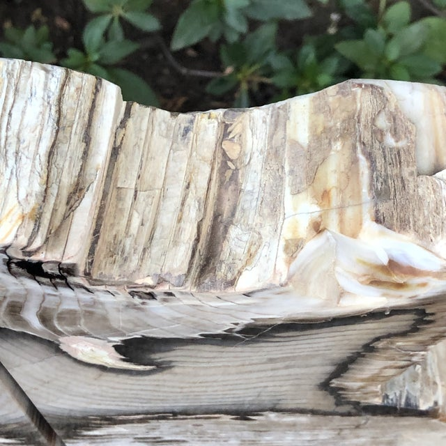 Fossilized Petrified Wood Bookends - a Pair For Sale - Image 4 of 10