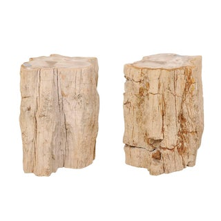 Rustic Natural Edge Light Colored Petrified Wood Drink Tables - a Pair For Sale