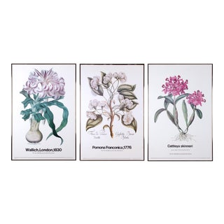 The New York Botanical Garden Print Series Vintage Botanical Prints - set of 3 For Sale