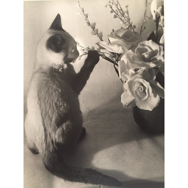 Siamese Cat and Roses 1956 Exibited Photograph - Image 2 of 4