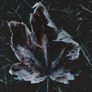 "Carsten Witte ""Autumn Leaf"" #2 of 3 Photograph For Sale"