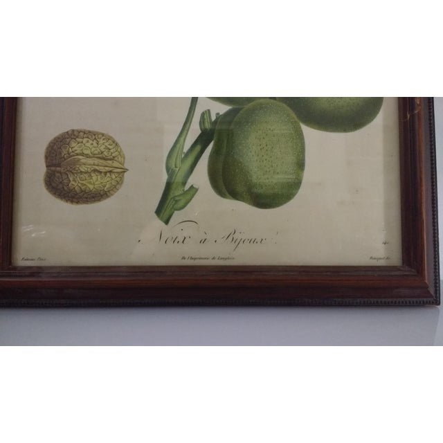 French Botanical Fruit Prints - A Pair - Image 7 of 9