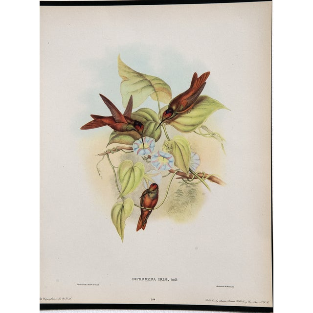Hummingbird Lithograph by John Gould - Image 5 of 7