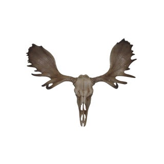 Wall Charmers Alberta Faux Natural Rustic Resin Moose Head Skull For Sale