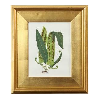 """""""Fern Specimen"""" Original Botanical Painting by Abigail Vogel For Sale"""