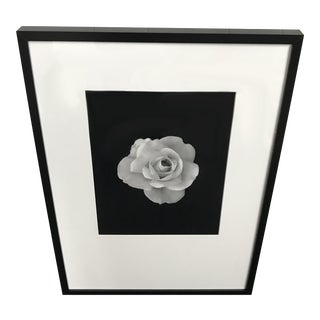 Framed Photograph of Rose in Bloom For Sale