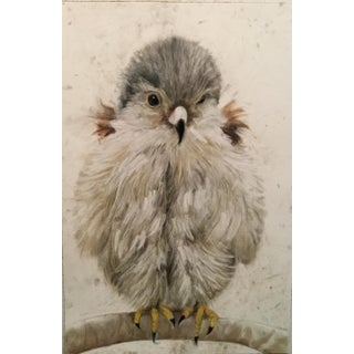 Baby Bird Contemporary Drawing For Sale