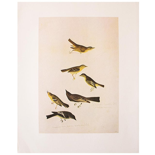 Yellow Birds of America by John James Audubon, 1966 Vintage Print For Sale - Image 8 of 8