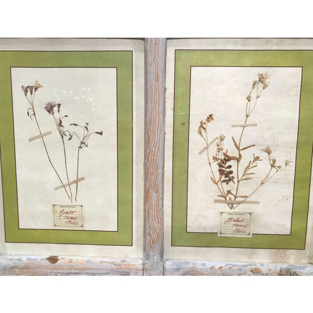 Glass Pair of 21st Century Italian Dried Botanical Flowers in Painted Frames For Sale - Image 7 of 11