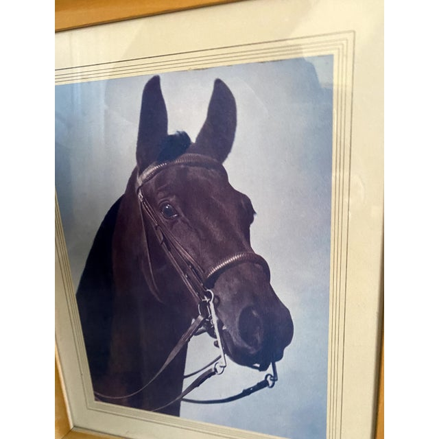 Mid 20th Century Horse Portrait Photograph, Framed For Sale - Image 4 of 9