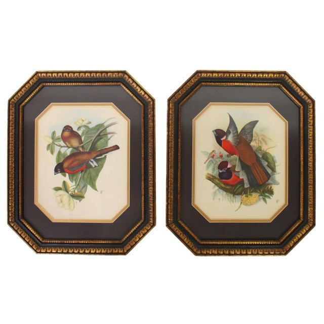 Mid 20th Century Framed European Ornithological Prints in the Manner of John James Audubon - a Pair For Sale - Image 5 of 5