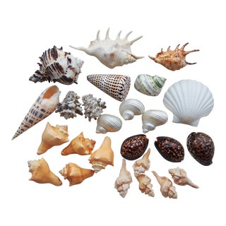 Southern Pacific Seashell Collection - Set of 29