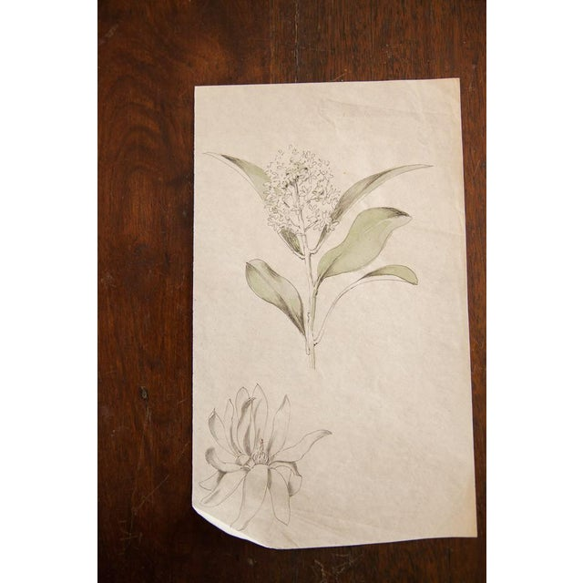 Antique Dainty Flower Watercolor Drawing - Image 2 of 4