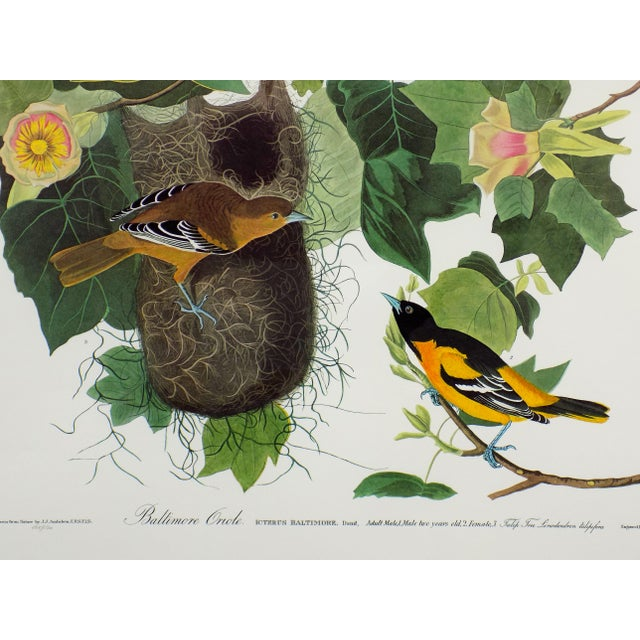Audubon's Baltimore Orioles Framed Print For Sale - Image 5 of 5