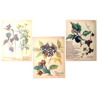 Vintage English Botanical Prints, S/3 For Sale
