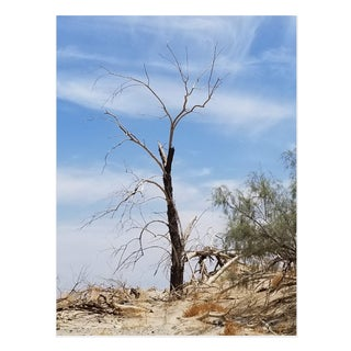 Americana Photograph of Bare Tree in the Desert