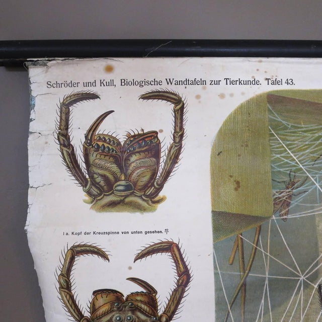 German Biology Chart of Spiders by Schroder Und Kull, 1910 For Sale - Image 9 of 10