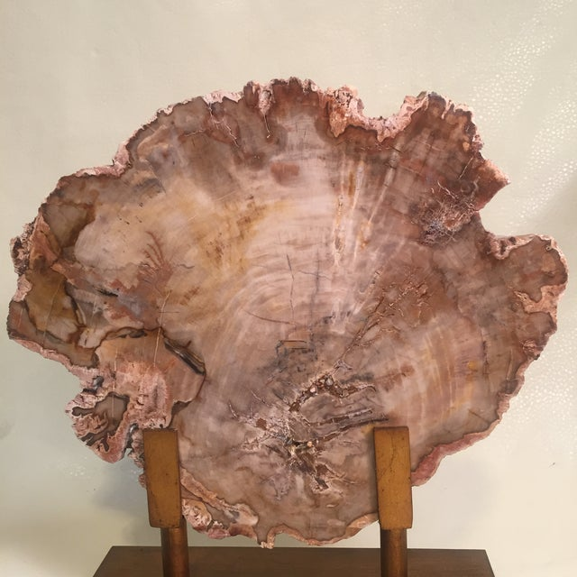Contemporary Petrified Wood Tree Slice on Museum Stand For Sale - Image 3 of 8
