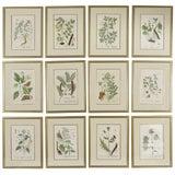Image of Late 18th Century Antique Elizabeth Blackwell Framed Botanical Prints - Set of 12 For Sale
