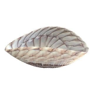 Italian Murano Shell Bowl