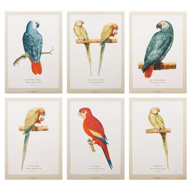 Blue XL 1590s Contemporary Prints of Anselmus Boëtius De Boodt Parrots - Set of 6 For Sale - Image 8 of 9