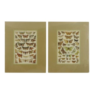1885 Antique Lithographs of Moths - A Pair For Sale
