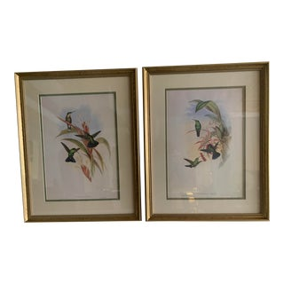 Mid 19th Century English Hand Colored Bird Prints After Gould and Richter, Framed - a Pair For Sale