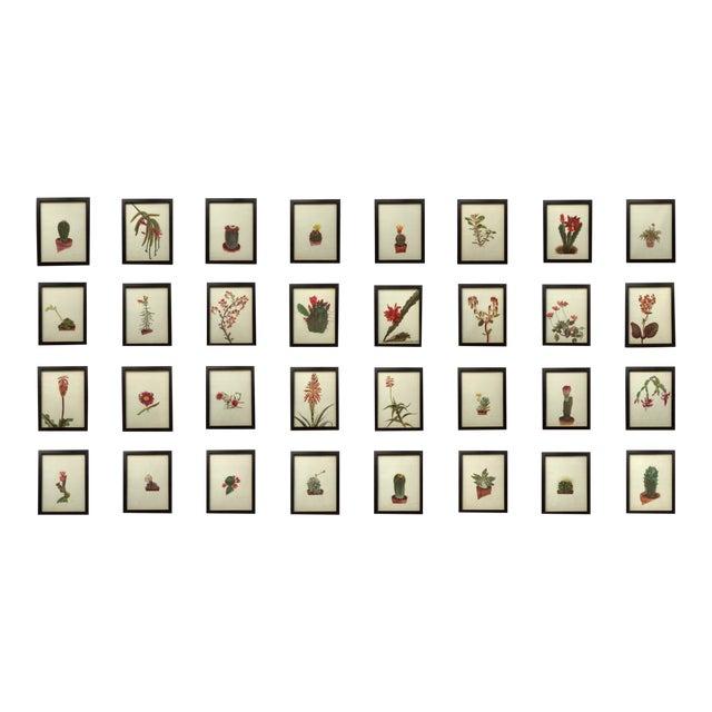 Framed Rock Plants - Set of 32 For Sale