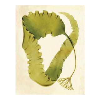 Harvey Seaweeds 12, Unframed Artwork For Sale
