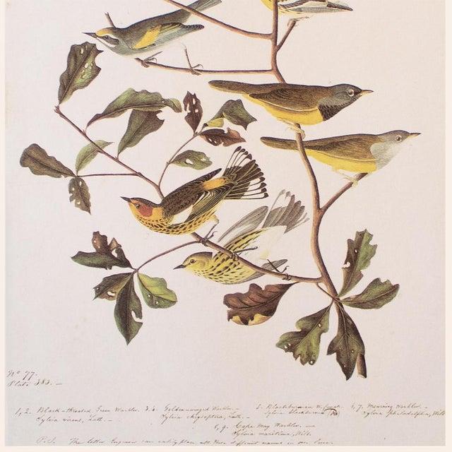 John James Audubon American Warblers by John James Audubon, Vintage Cottage Style Print For Sale - Image 4 of 8
