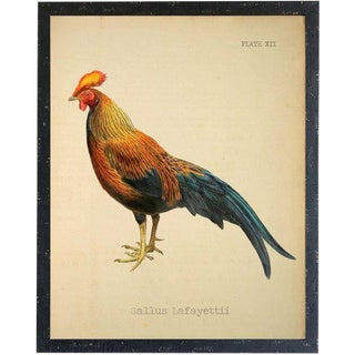 Gallus Lafayettii Rooster 20x26 For Sale