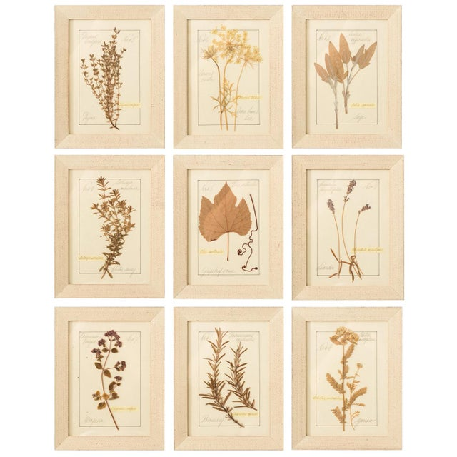 Set of Pressed Herb Frames For Sale - Image 12 of 12
