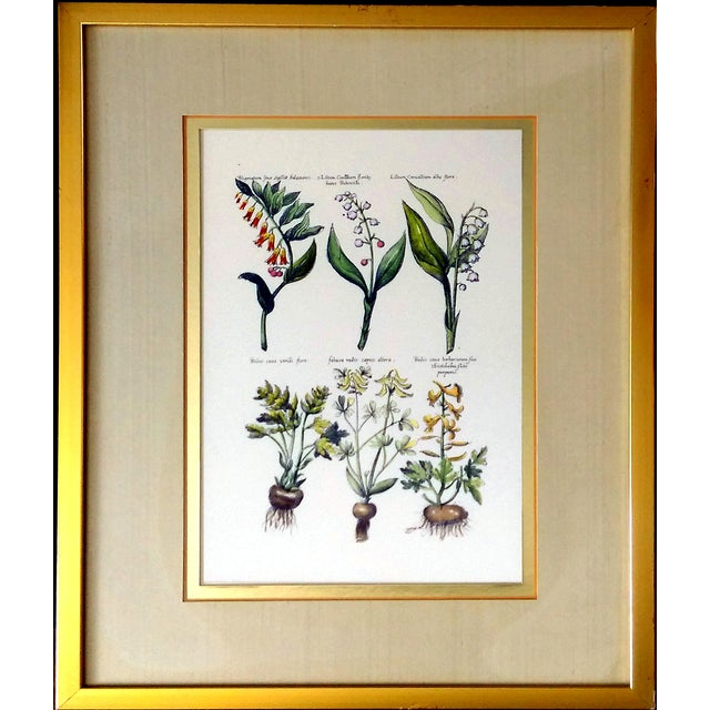 Botanical Print by Emanuel Sweert - Image 1 of 6