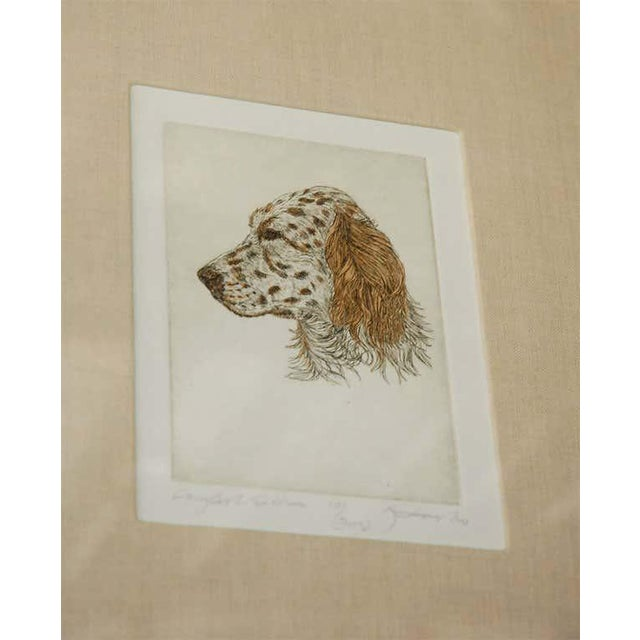 Colored Etching of Whippet Hunting Dog For Sale In Los Angeles - Image 6 of 8