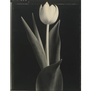"""Tom Baril """"Tulip"""" Photograph For Sale"""