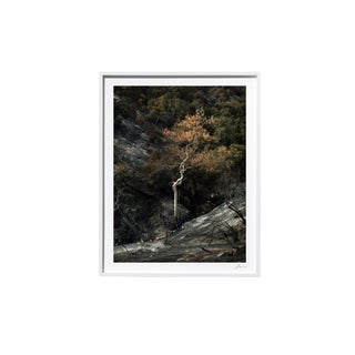 "Timothy Hogan ""White"" Original Framed Color Landscape Photograph, 2017 For Sale"